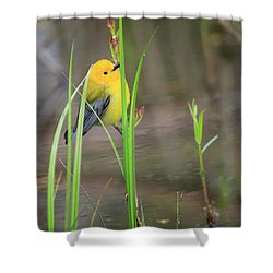 Prothonotary Warbler 5 Shower Curtain by Gary Hall
