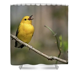 Prothonotary Warbler Singing Shower Curtain