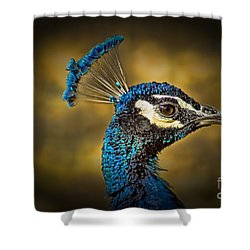 Proud As A Peacock Shower Curtain
