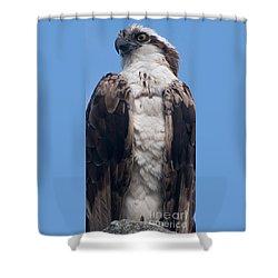 Proud Hawk Shower Curtain
