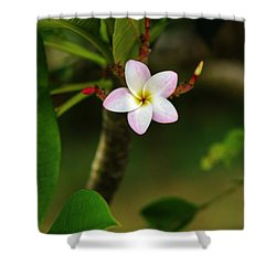 Shower Curtain featuring the photograph Proud Little Blossom by Craig Wood