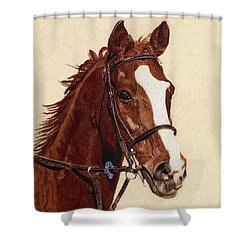 Proud - Portrait Of A Thoroughbred Horse Shower Curtain by Patricia Barmatz