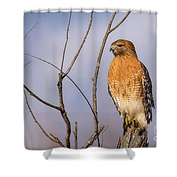 Proud Profile Shower Curtain by Charles Hite