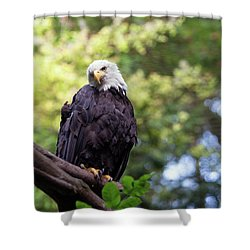 Shower Curtain featuring the photograph Proud by Rebecca Cozart