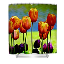 Proud Tulips Shower Curtain