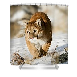 Prowling Mountain Lion Shower Curtain