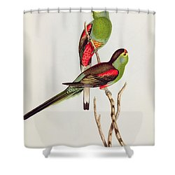 Psephotus Pulcherrimus Shower Curtain by John Gould