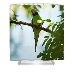 Psittacula Krameri Shower Curtain by Venura Herath