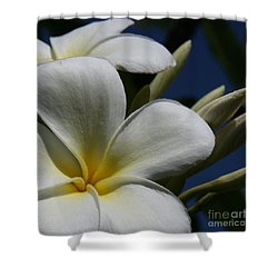 Pua Lena Pua Lei Aloha Tropical Plumeria Maui Hawaii Shower Curtain