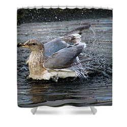 Puddle Bath Shower Curtain