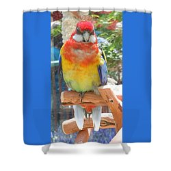Multi-color Pudgy Budgie Shower Curtain