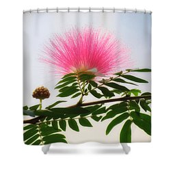 Puff Of Pink - Mimosa Flower Shower Curtain by MTBobbins Photography