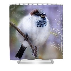 Puffball  Shower Curtain