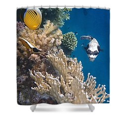 Pufferfish And Butterflyfish Shower Curtain
