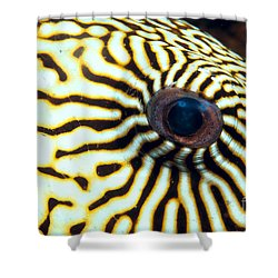 Pufferfish Shower Curtain by Dave Fleetham - Printscapes