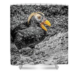 Puffin Bw With Splash Of Color Shower Curtain