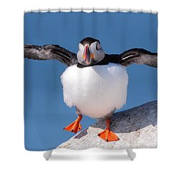 Puffin Dance Shower Curtain by Bruce J Robinson