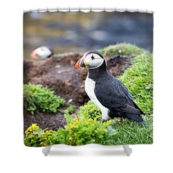 Puffin  Shower Curtain by Jane Rix