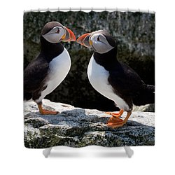 Puffin Love Shower Curtain by Brent L Ander