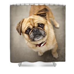 Pug Dog 2 Shower Curtain by Mike Santis