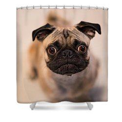 Shower Curtain featuring the photograph Pug Dog by Laura Fasulo