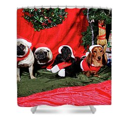 Pugs And Dachshounds Dressed As Father Christmas Shower Curtain