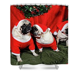 Pugs Dressed As Father-christmas Shower Curtain