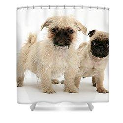 Pugzu And Pug Puppies Shower Curtain by Jane Burton