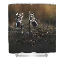 Shower Curtain featuring the photograph Pulsatilla Nigricans by Davorin Mance