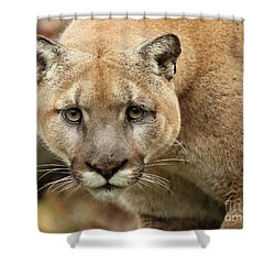 Puma Male Approaching Shower Curtain by Max Allen