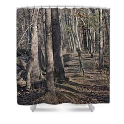 Pumpkin Ash Trail Shower Curtain