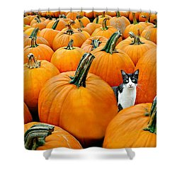 Pumpkin Patch Cat Shower Curtain