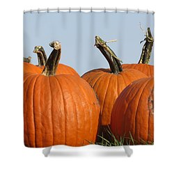 Pumpkin Patch II Shower Curtain by Kyle West