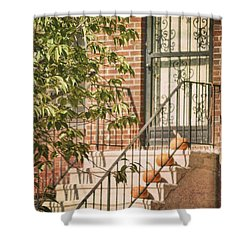 Pumpkin Portico Shower Curtain by JAMART Photography