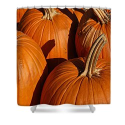 Pumpkins Shower Curtain by Michael Thomas