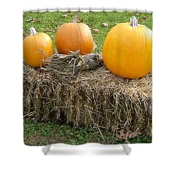 Pumpkins On A Haystack Shower Curtain