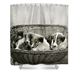 Puppies Of The Past Shower Curtain by Marilyn Hunt