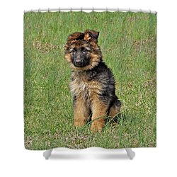 Shower Curtain featuring the photograph Puppy Halo by Sandy Keeton