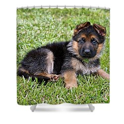 Puppy In The Spring Shower Curtain by Sandy Keeton