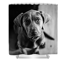 Puppy - Monochrome 1 Shower Curtain