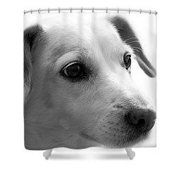 Puppy - Monochrome 4 Shower Curtain