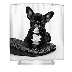 Puppy - Monochrome 5 Shower Curtain