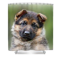 Puppy Portrait Shower Curtain by Sandy Keeton