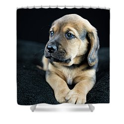 Puppy Portrait Shower Curtain