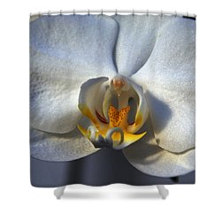 Shower Curtain featuring the photograph Pure Form And Color by Lynda Lehmann