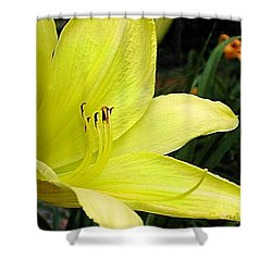 Shower Curtain featuring the photograph Pure Sunshine by Patricia Griffin Brett