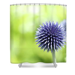 Purple Allium 1 Shower Curtain