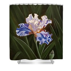 Purple And White Iris Shower Curtain