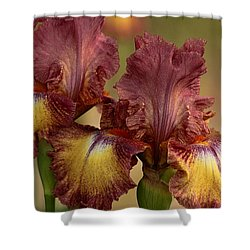 Shower Curtain featuring the photograph Purple And Yellow Bearded Iris by Sheila Brown