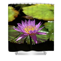 Purple And Yellow Water Lily Shower Curtain